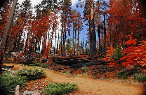 Yosemite (Image: vl8189)