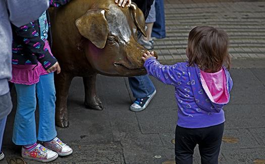 Rachel the Pig