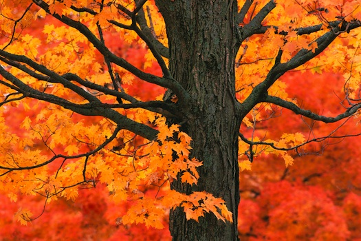 New England autumn trees © Michael Warwick, 2013. Used under license from Shutterstock.com