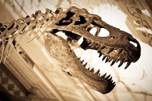 Natural History Museum © Josh Hallett/flickr (https://www.flickr.com/photos/hyku/3856462671)
