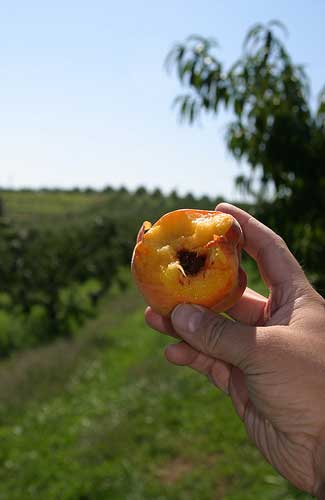 Connecticut's bountiful produce (Image: ben pollard used under a Creative Commons Attribution-ShareAlike license)