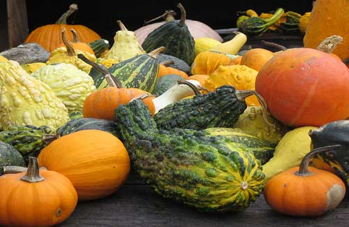 Connecticut's bountiful produce (Image: Dougtone used under a Creative Commons Attribution-ShareAlike license)