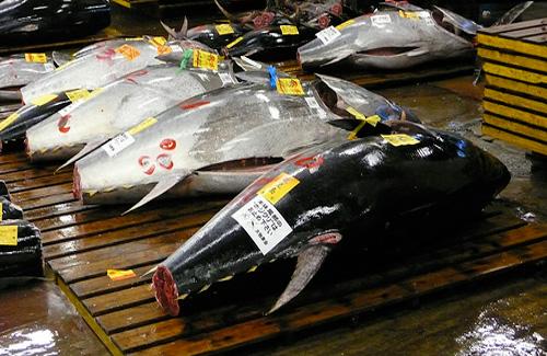 Tsujiki Fish Market, Tokyo (Image: Ginger Beered used under a Creative Commons Attribution-ShareAlike license)