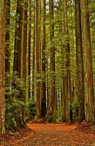 Redwood National Forest, California (Image: goingslo)
