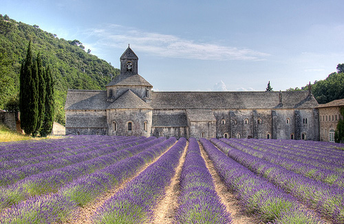 Lavender fields of Provence, France (Image: decar66)