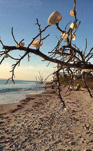 Stump Pass Beach State Park
