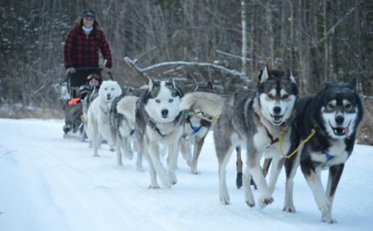 Muddy Paw Sled Dogs (Image: mwvchamber)
