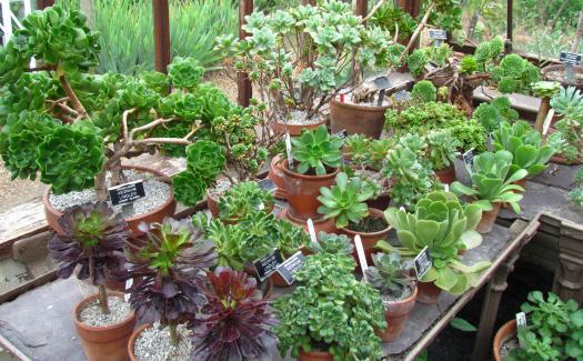 Chelsea Physic Garden (Image: 82479320@N00)