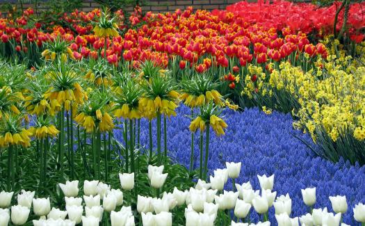 Bright, beautiful flowers (Image: bilk)