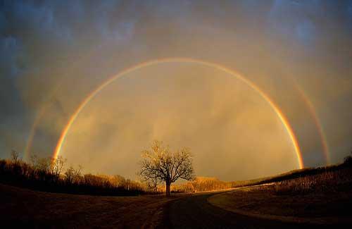 A rainbow over a tree (Image: deanaarcher)