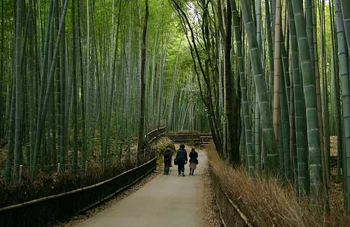 Bamboo forest, Japan (Image: Lachlan & Marline used under a Creative Commons Attribution-ShareAlike license)