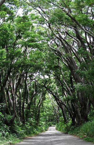 Barbados (Image: OakleyOriginals)