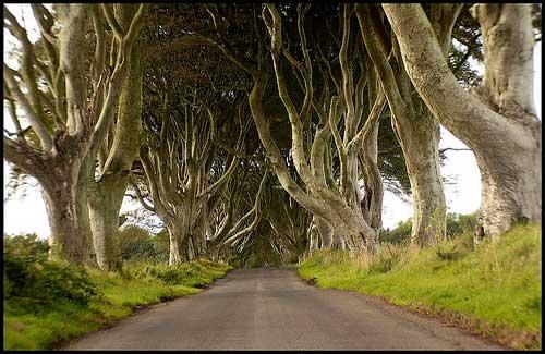 Dark Hedges, Ireland (Image: Paul Bowman)